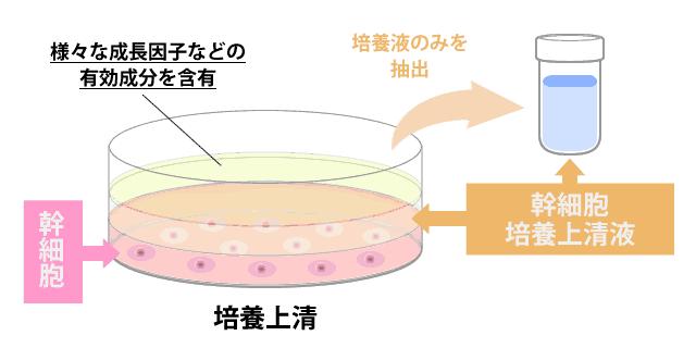 【育毛剤】ヒト幹細胞養毛料「セルヘアプラス」を試してみた-効果-05