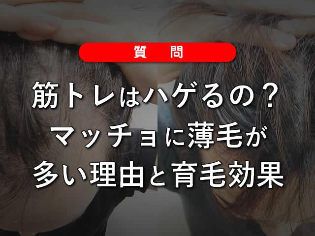 【質問】筋トレはハゲるの?マッチョに薄毛が多い理由と育毛効果-00