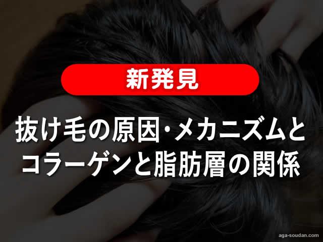 【新発見】抜け毛の原因・メカニズムとコラーゲンと脂肪層の関係